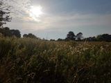 Open field and grasses under a blue sky